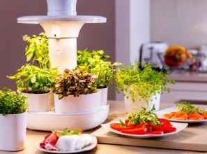 Indoors appliance for growing with fresh herbs, salads and micro greens